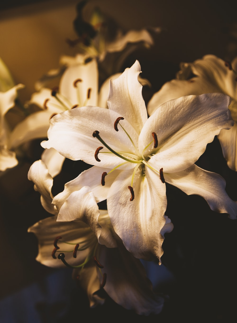 selective focus photography of white lily flower