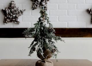 green Christmas tree decor on top of brown table