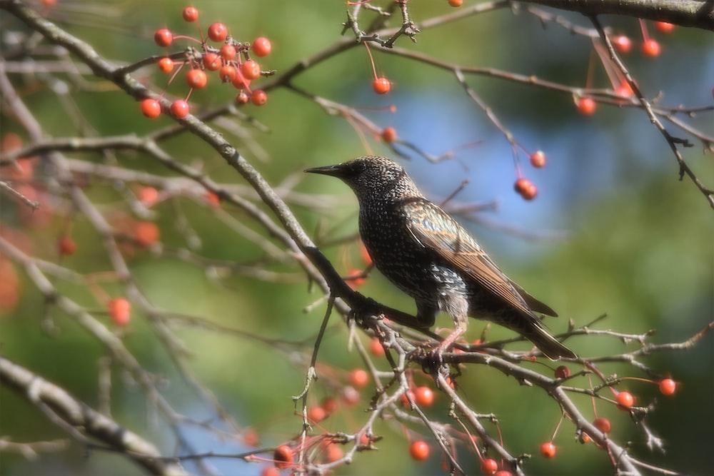 brown bird perching on tree during daytime