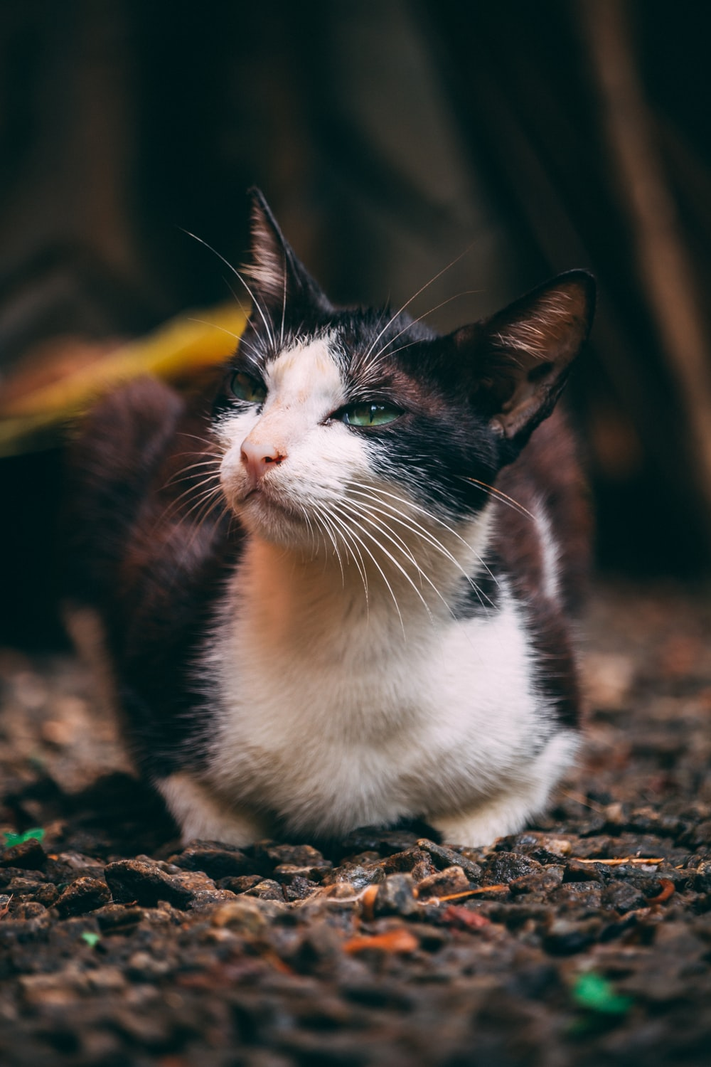selective focus photography of sitting tuxedo cat