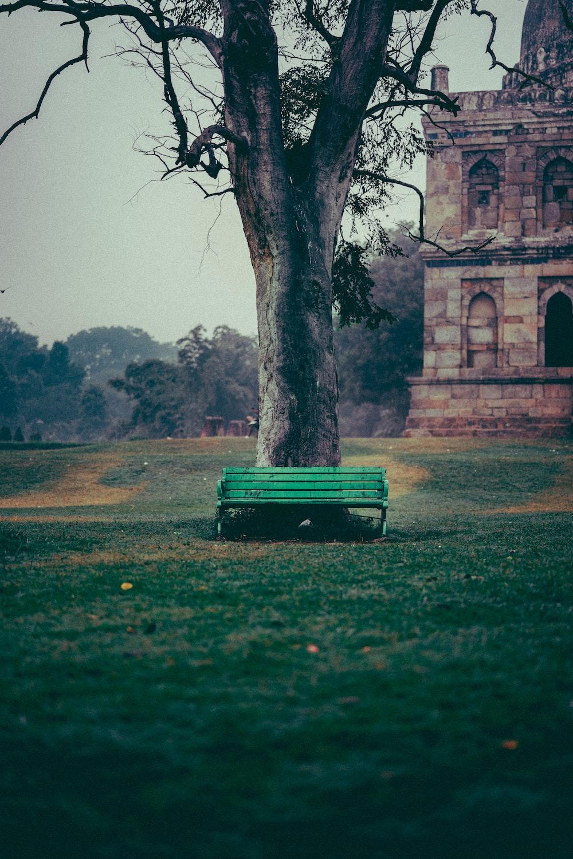 green bench beside tree