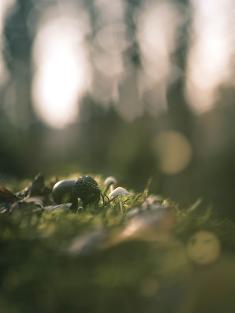 close-up photography of green grass