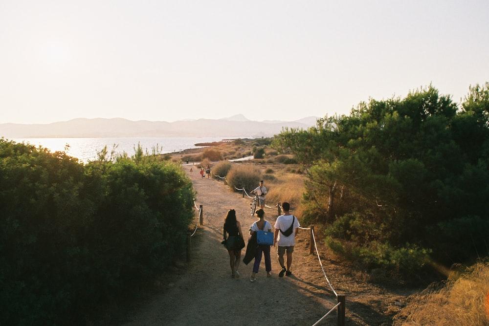 people walking near green trees during daytime