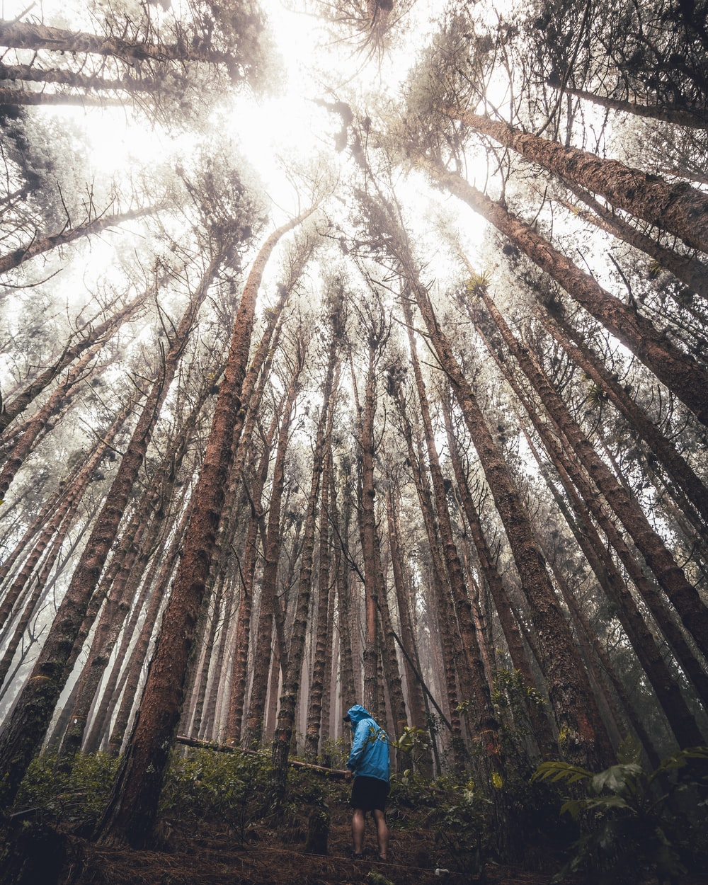 man under tall trees in forest during daytime