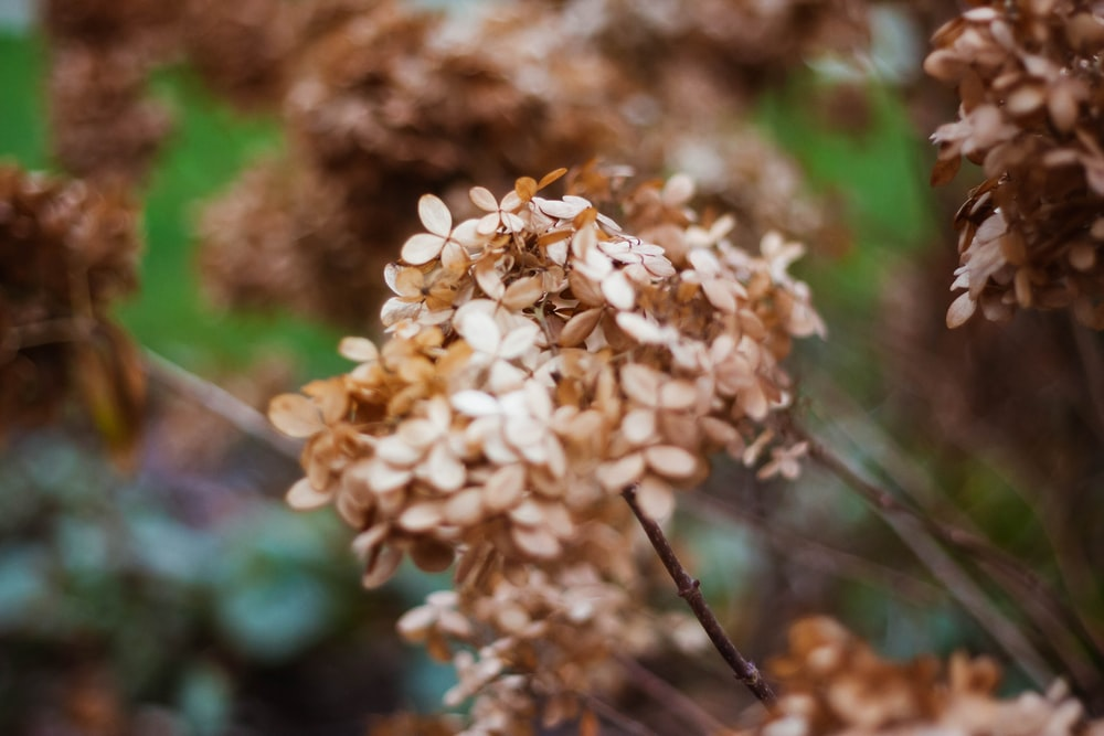 closeup photography of brown petaled flowers
