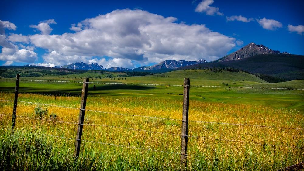 fence near grass field