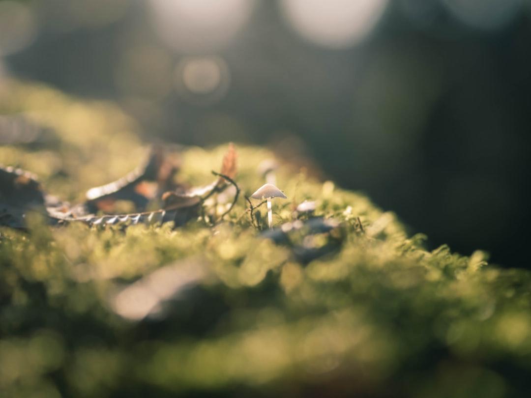 Mushroom in the Light