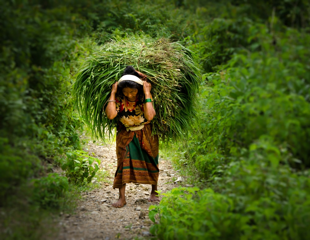 woman carrying hay during daytime