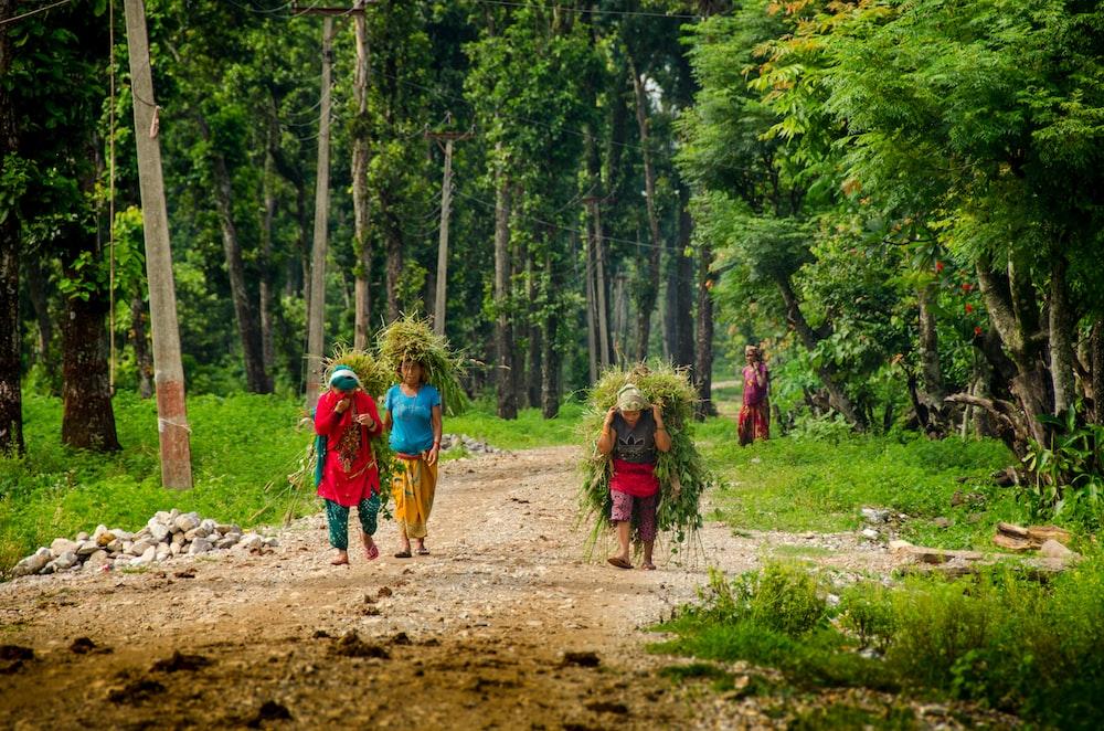 four people walking near trees