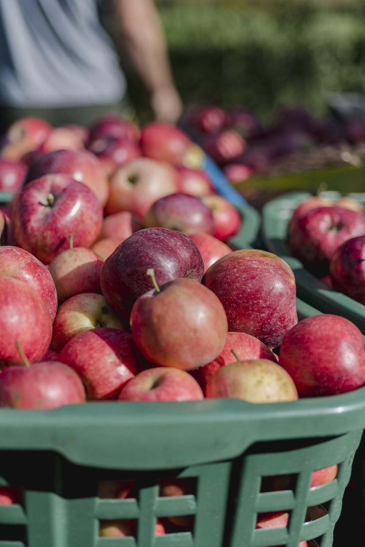 Apple fruits in green plastic basket