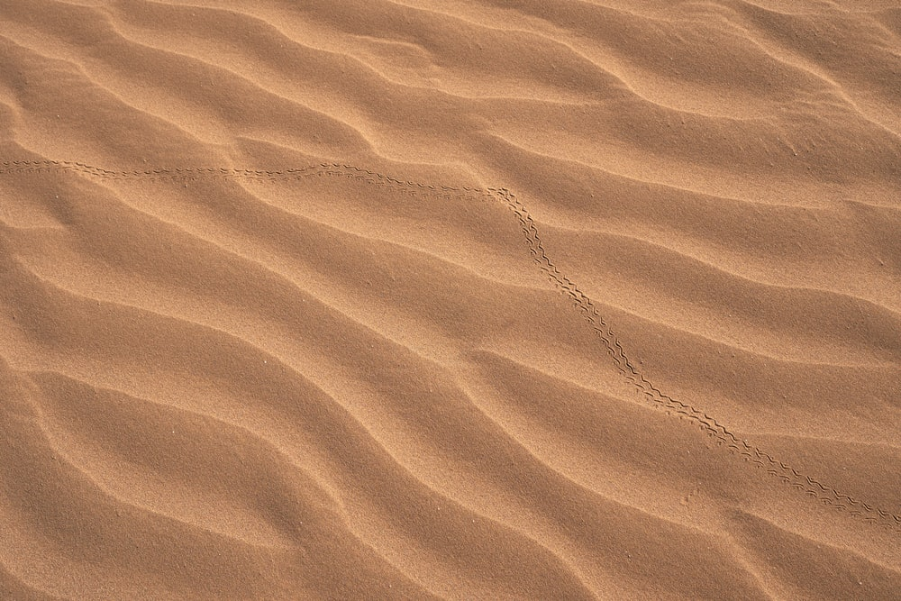 500 Sand Dune Pictures Hd Download Free Images On Unsplash