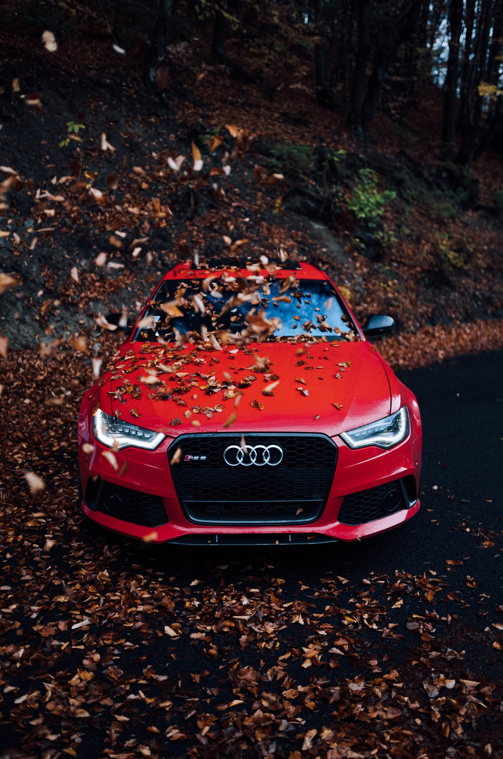red Audi car with dried leaves above hood
