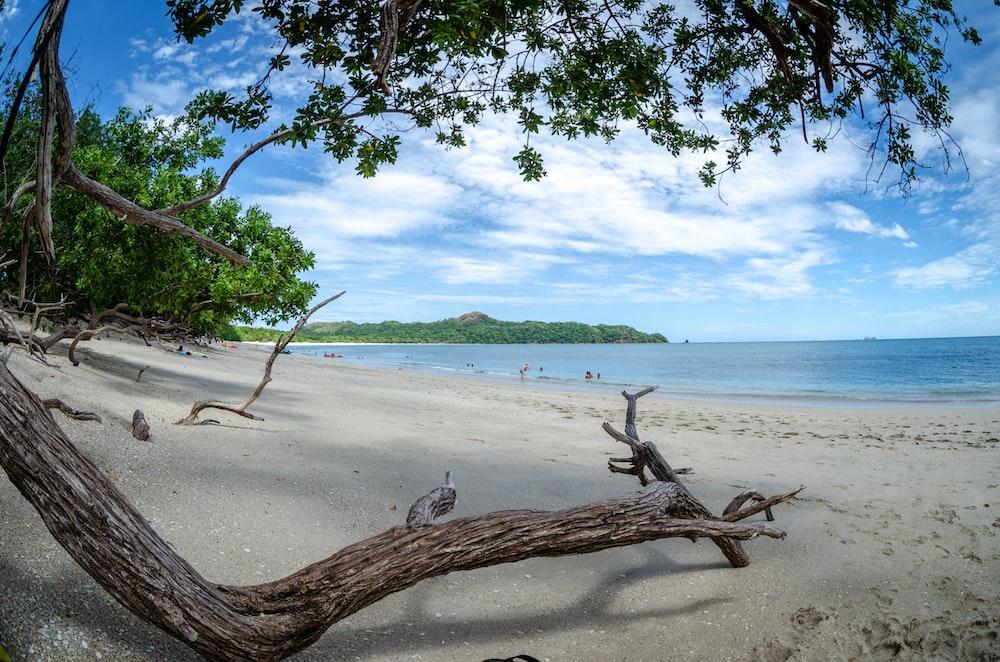 brown tree trunk on seashore