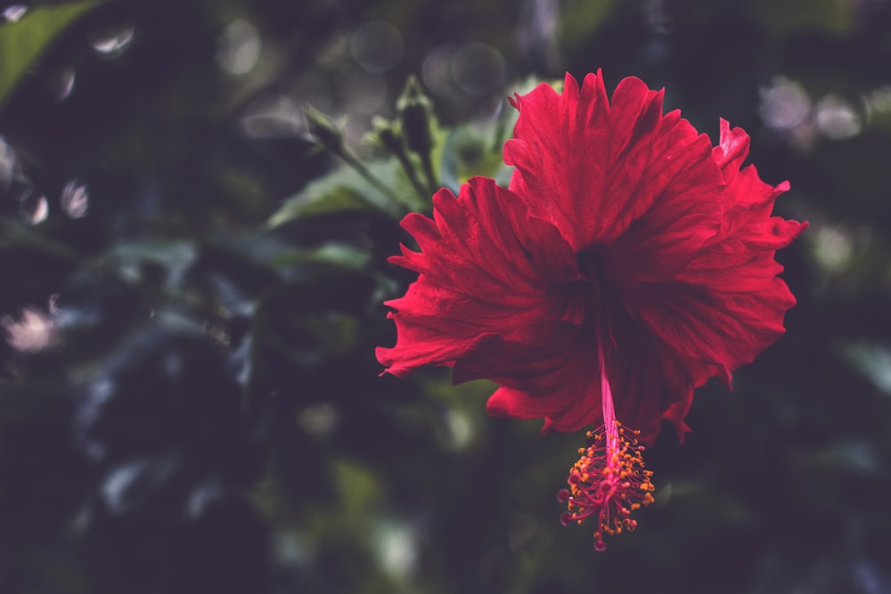 Tropical Flower Pictures Download Free Images On Unsplash