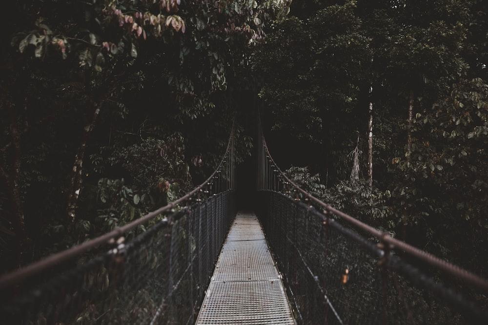 brown and gray hanging bridge beside trees
