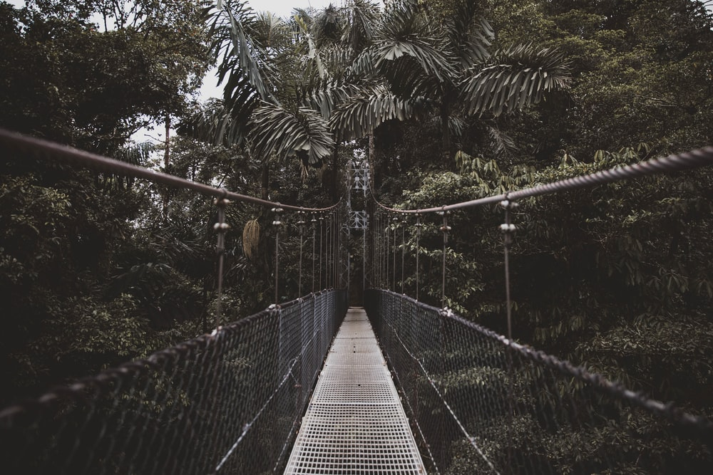 grayscale photo of hanging bridge
