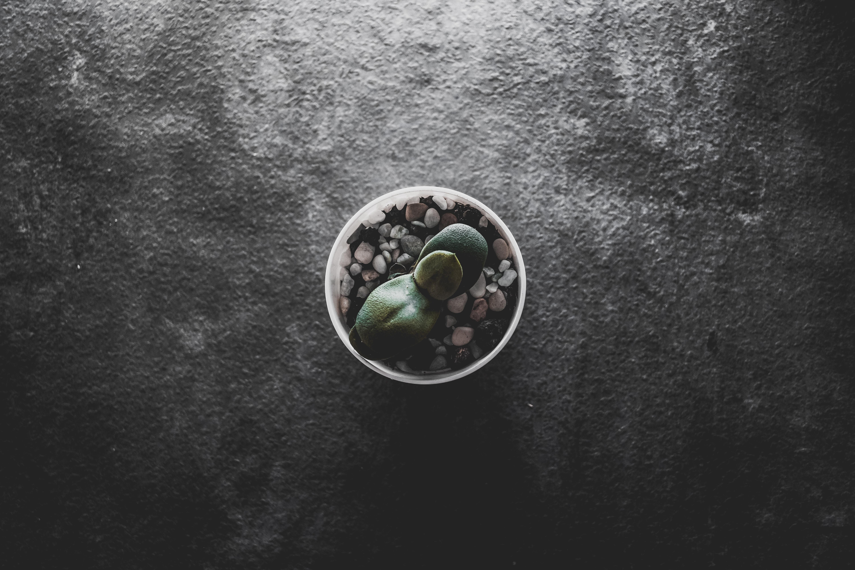 high-angle photography of green plant on pot