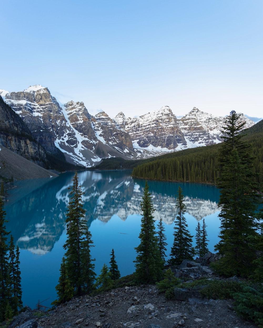 pine trees near lake and mountains