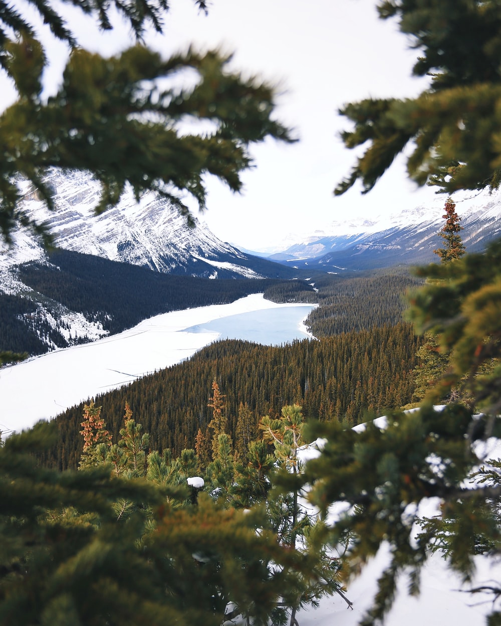 lake between mountains with pine trees