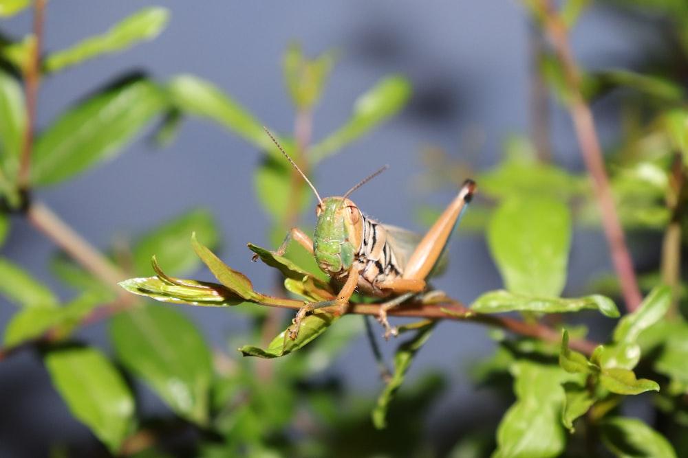 green grasshopper perching on green plant