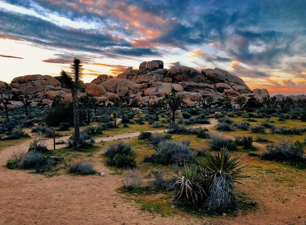 green grass near brown rock formation during golden hour