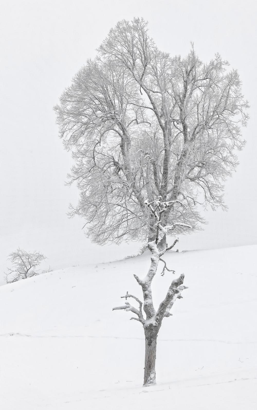 brown bare tree