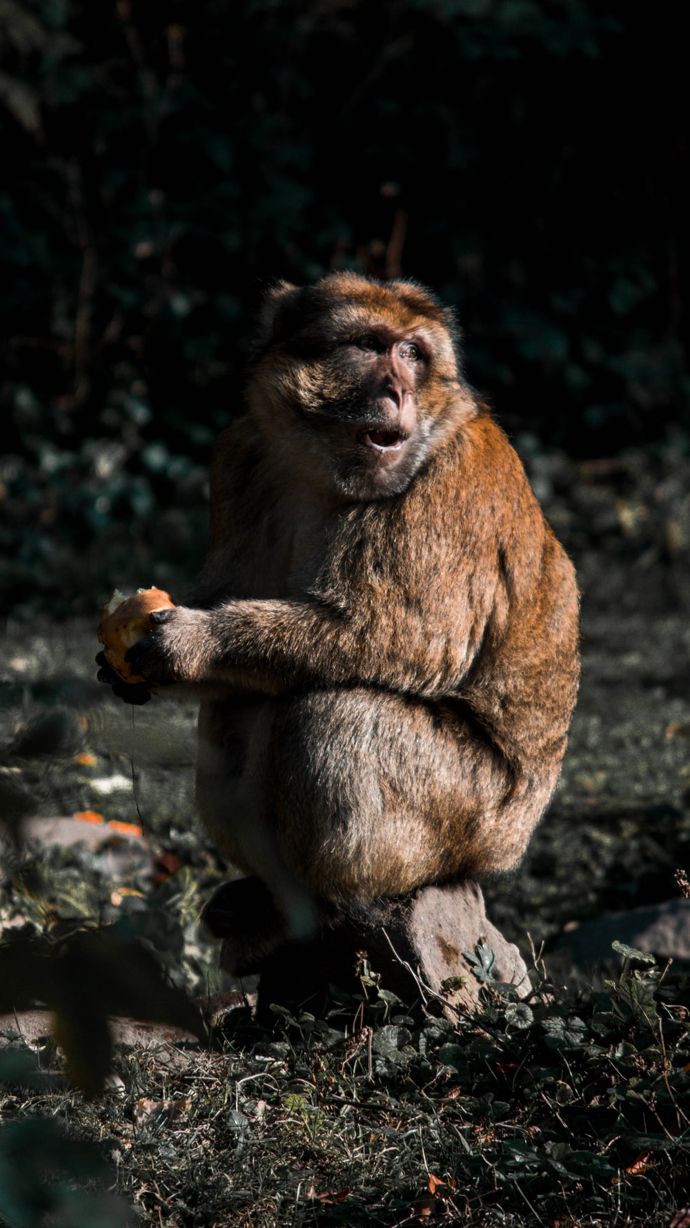 primate sitting on wood slab