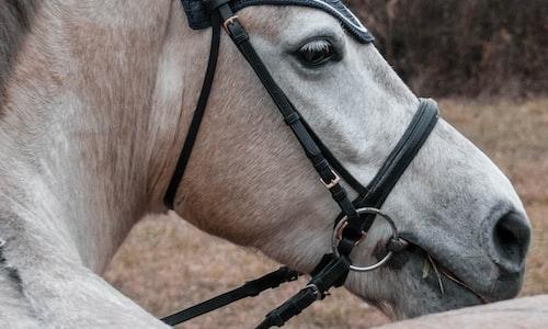 horse racing pickup line