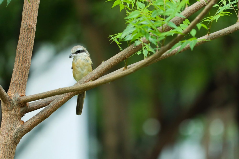 closeup photography of yellow bird perched on tree during daytime
