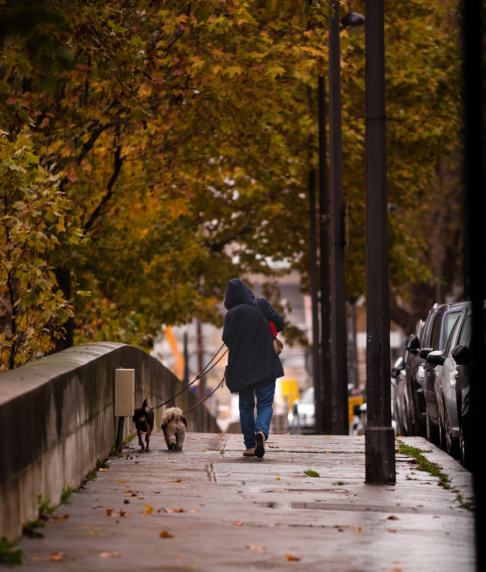 person walking on street with dog