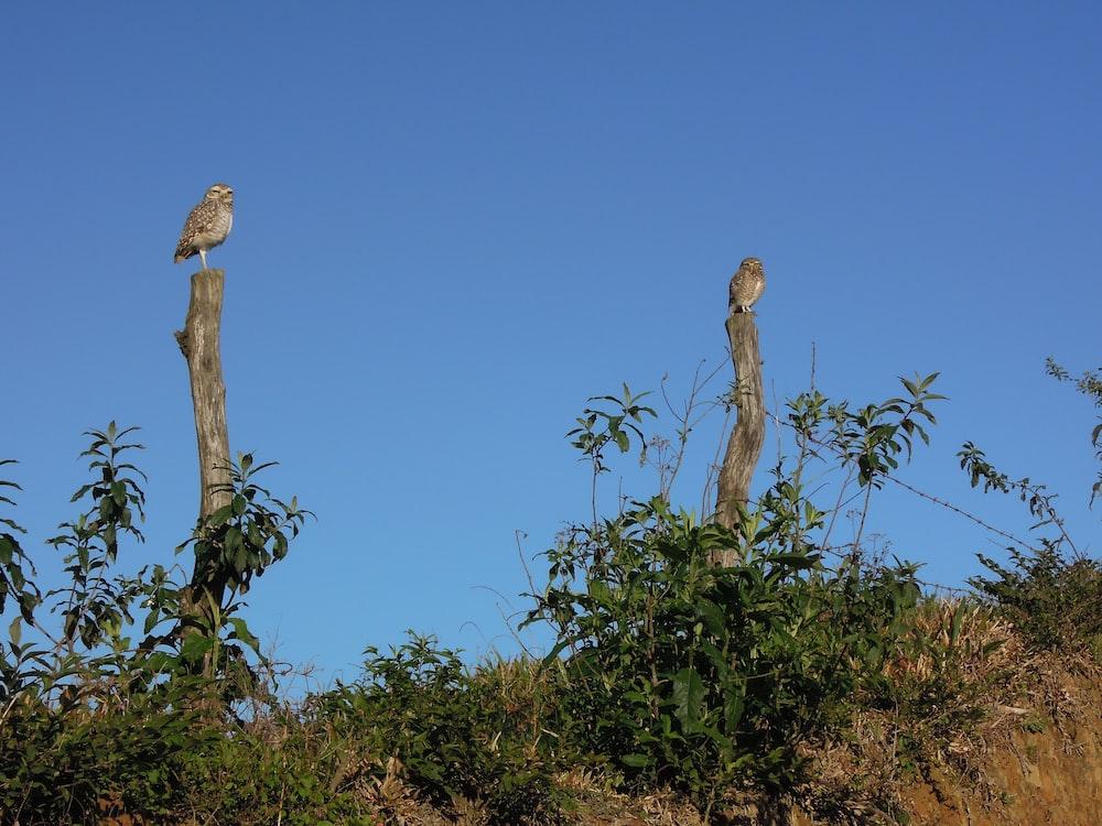 two birds on tree slab under clear blue sky