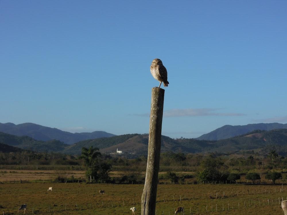 bird on tree during daytime