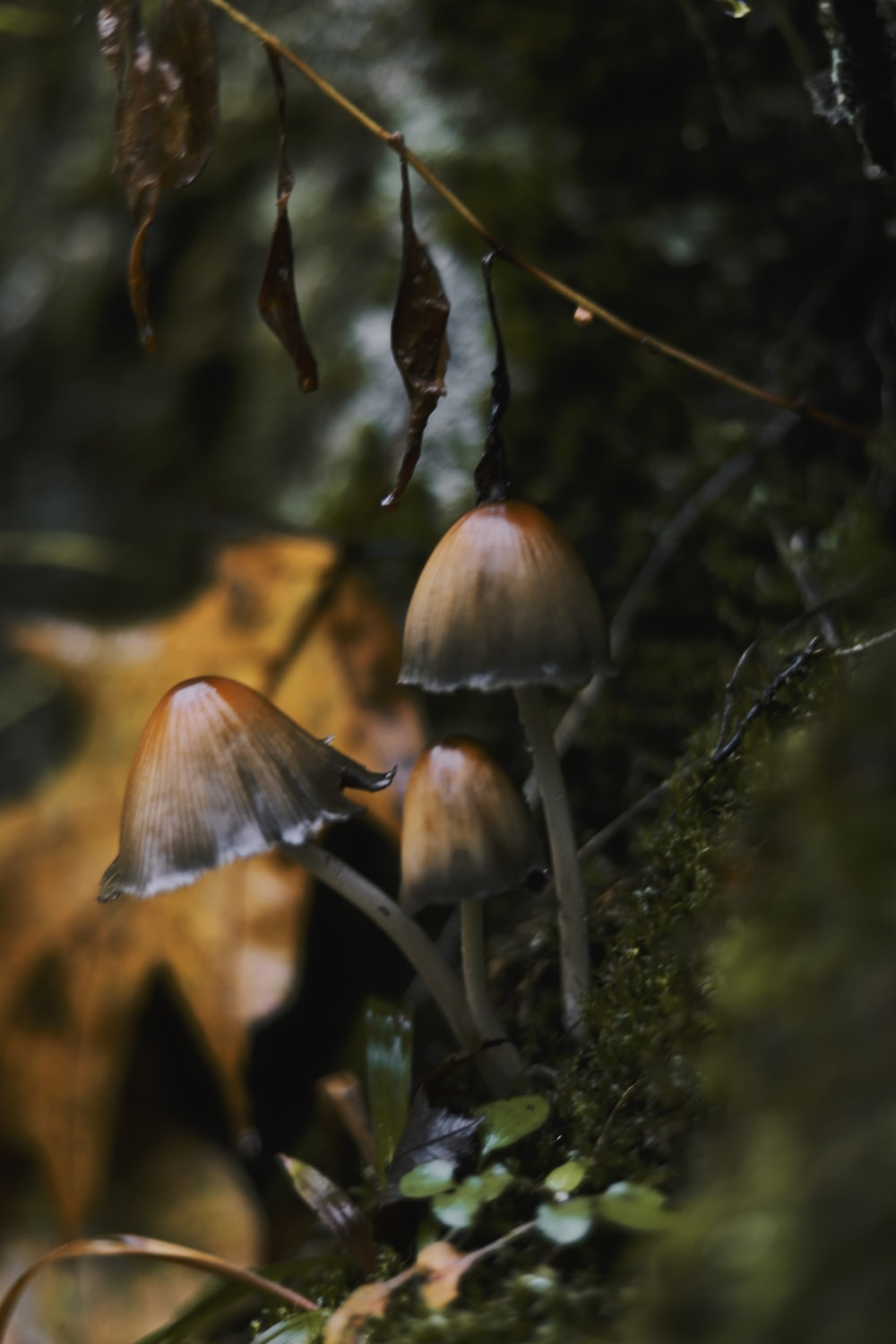 close-up photography of brown mushroom
