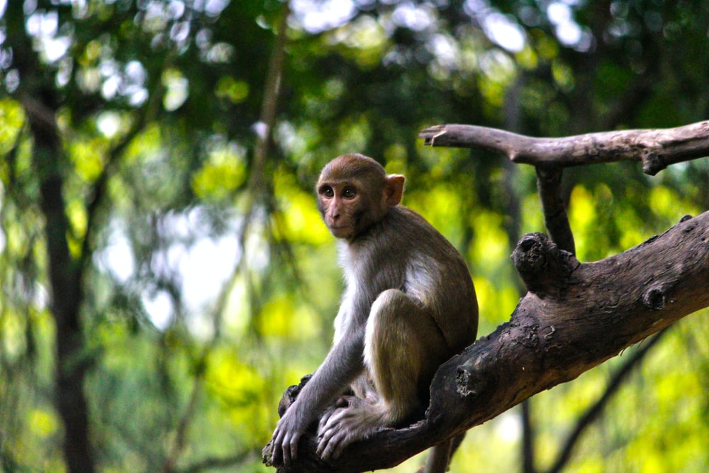 gray primate on tree branch