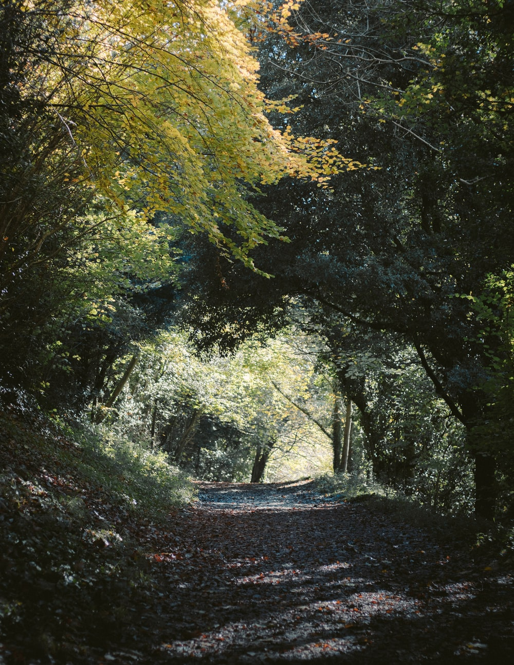 view of road through forest