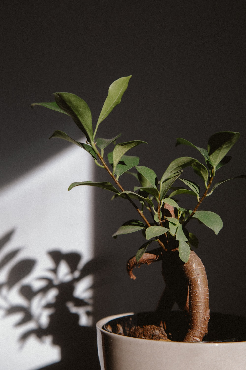 green-leafed potted plant