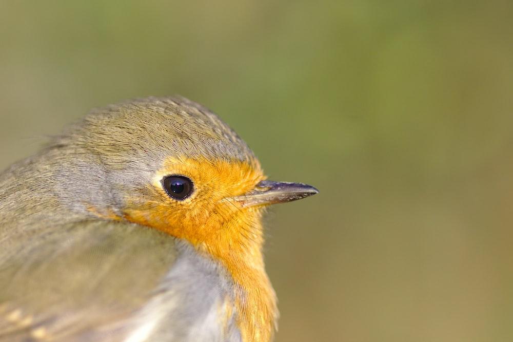 selective focus photography of brown bird