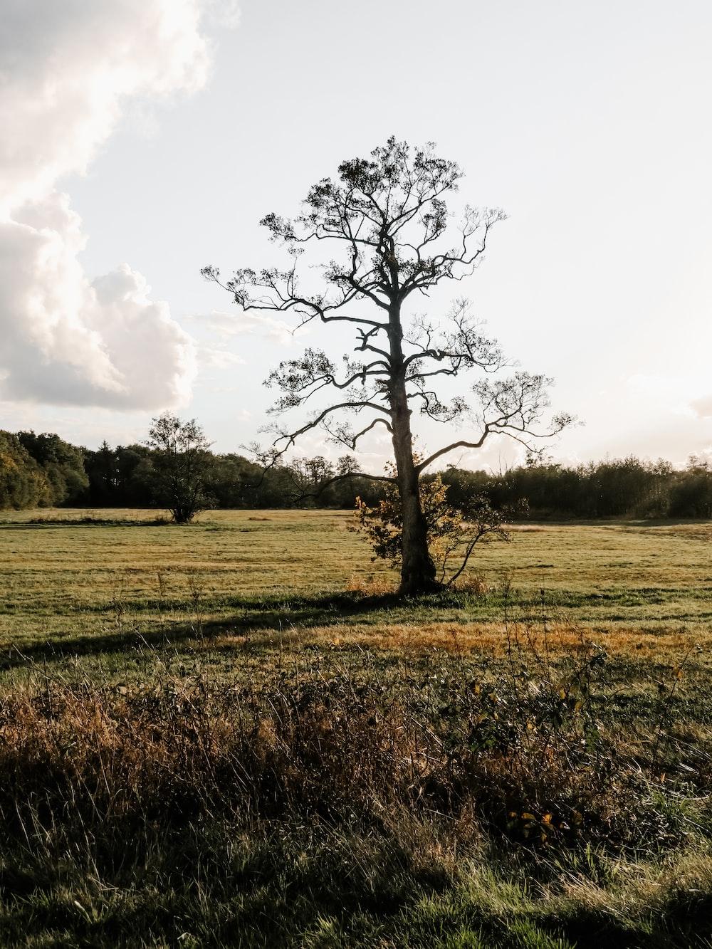 tree on landscape field