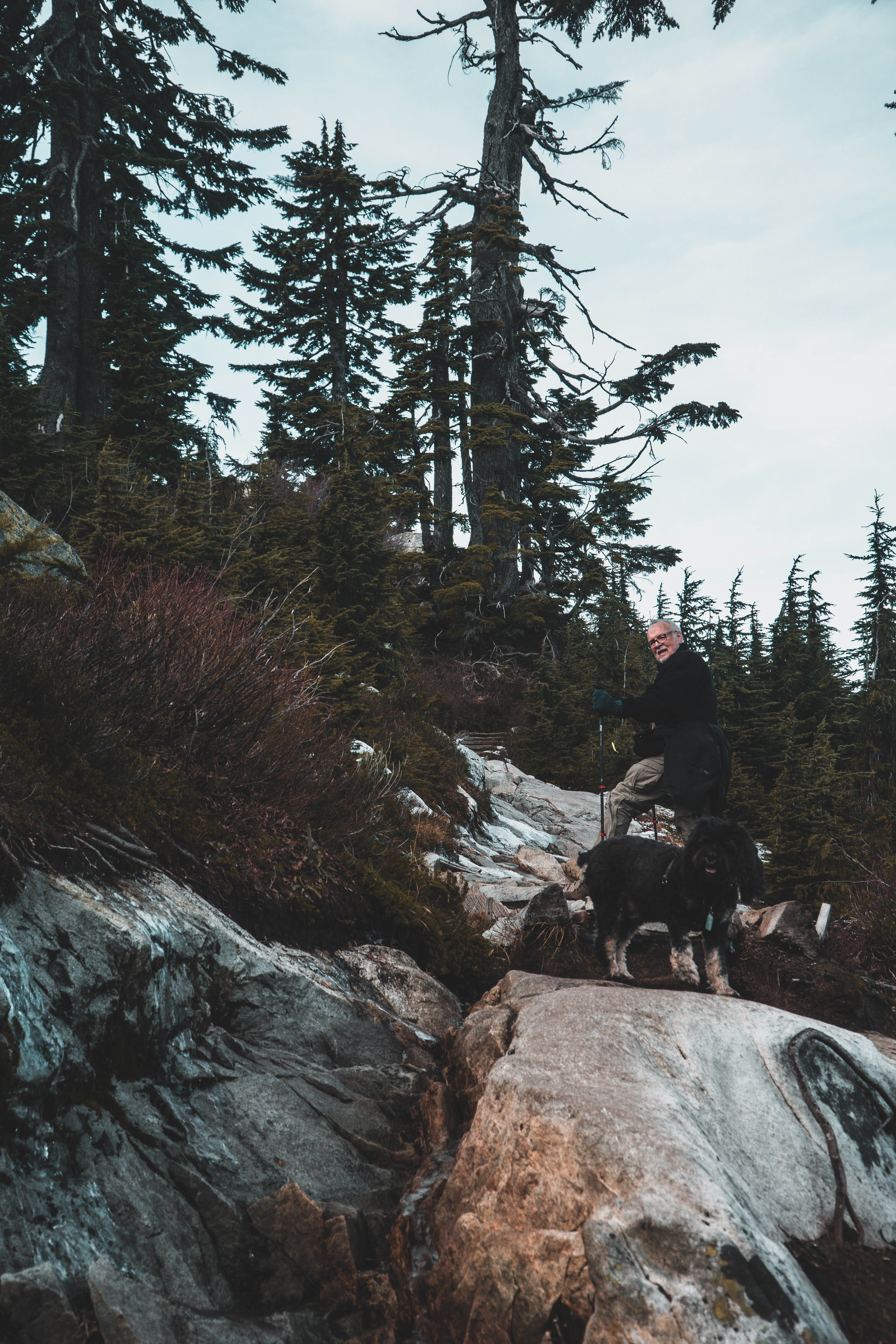 black dog on cliff near tall trees