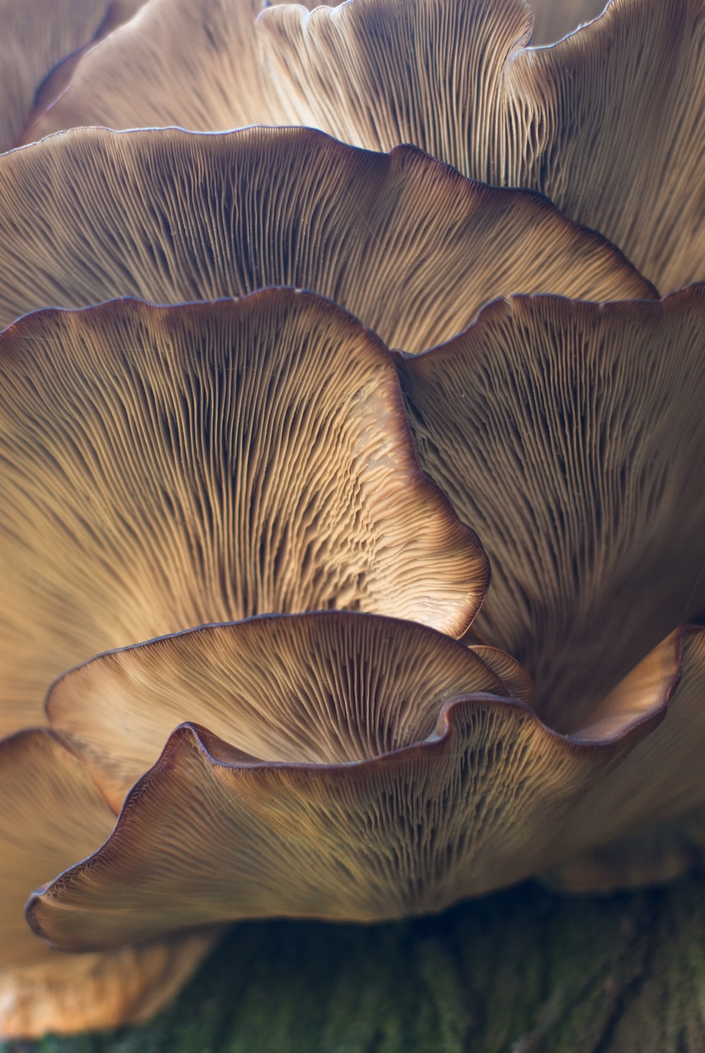 selective focus photo of mushroom