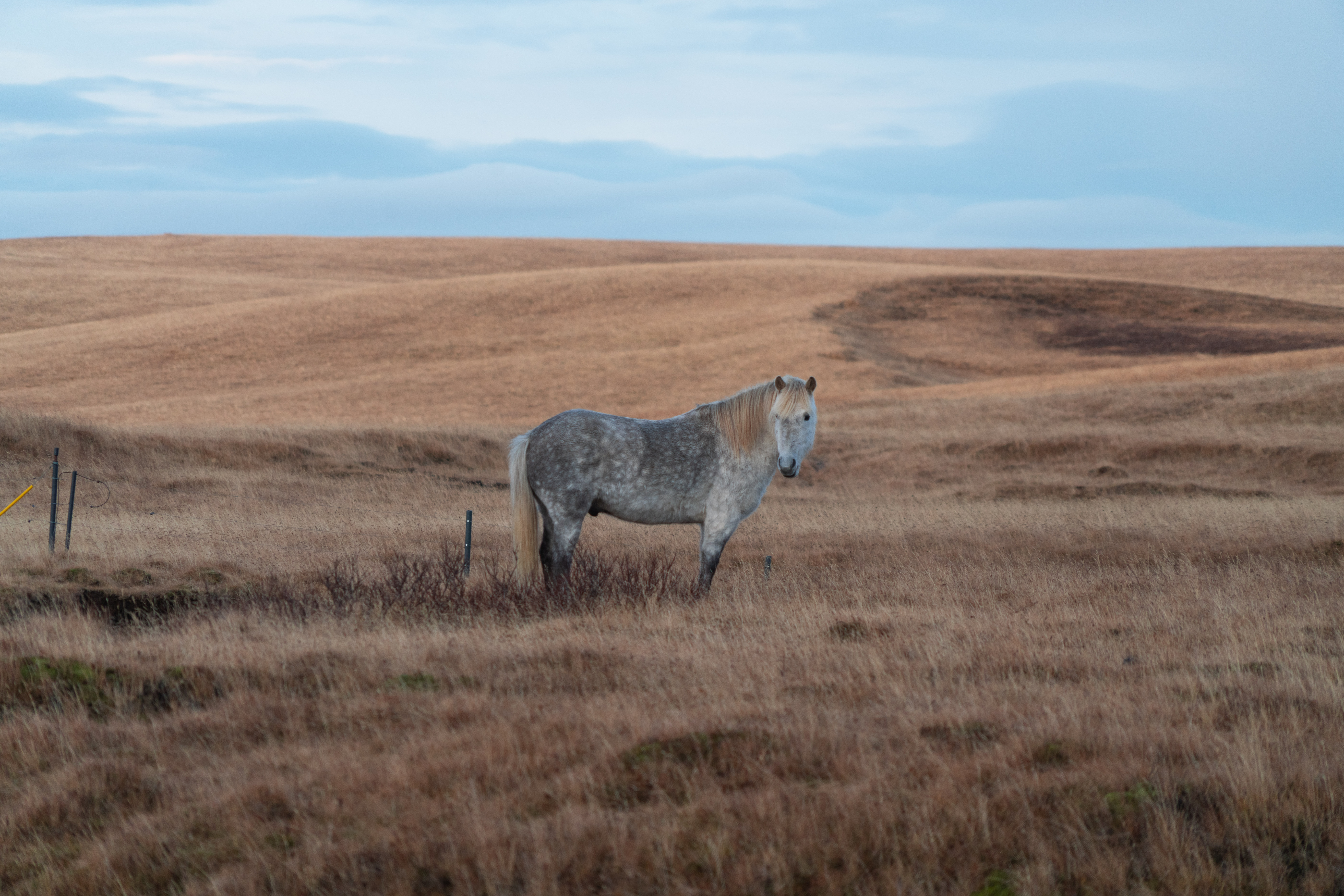 horse standing on brown grass field