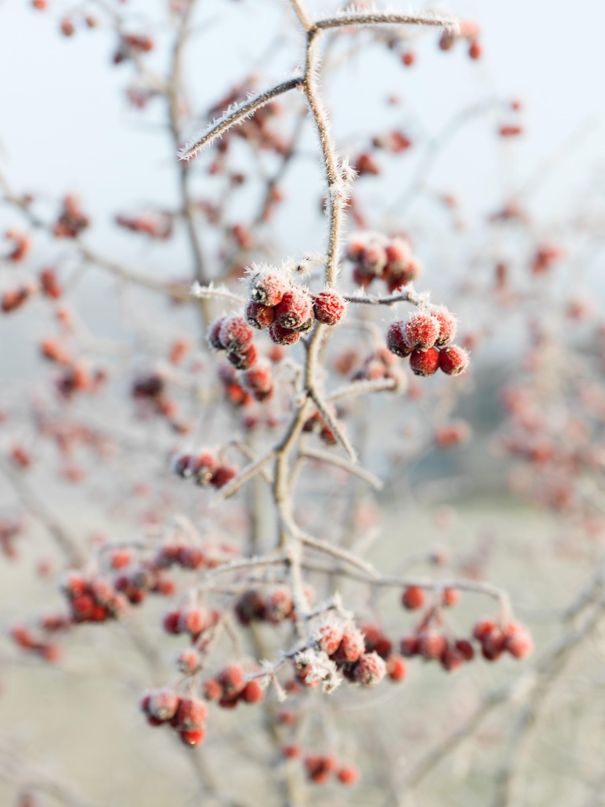 selective focus photo of bunch of berry