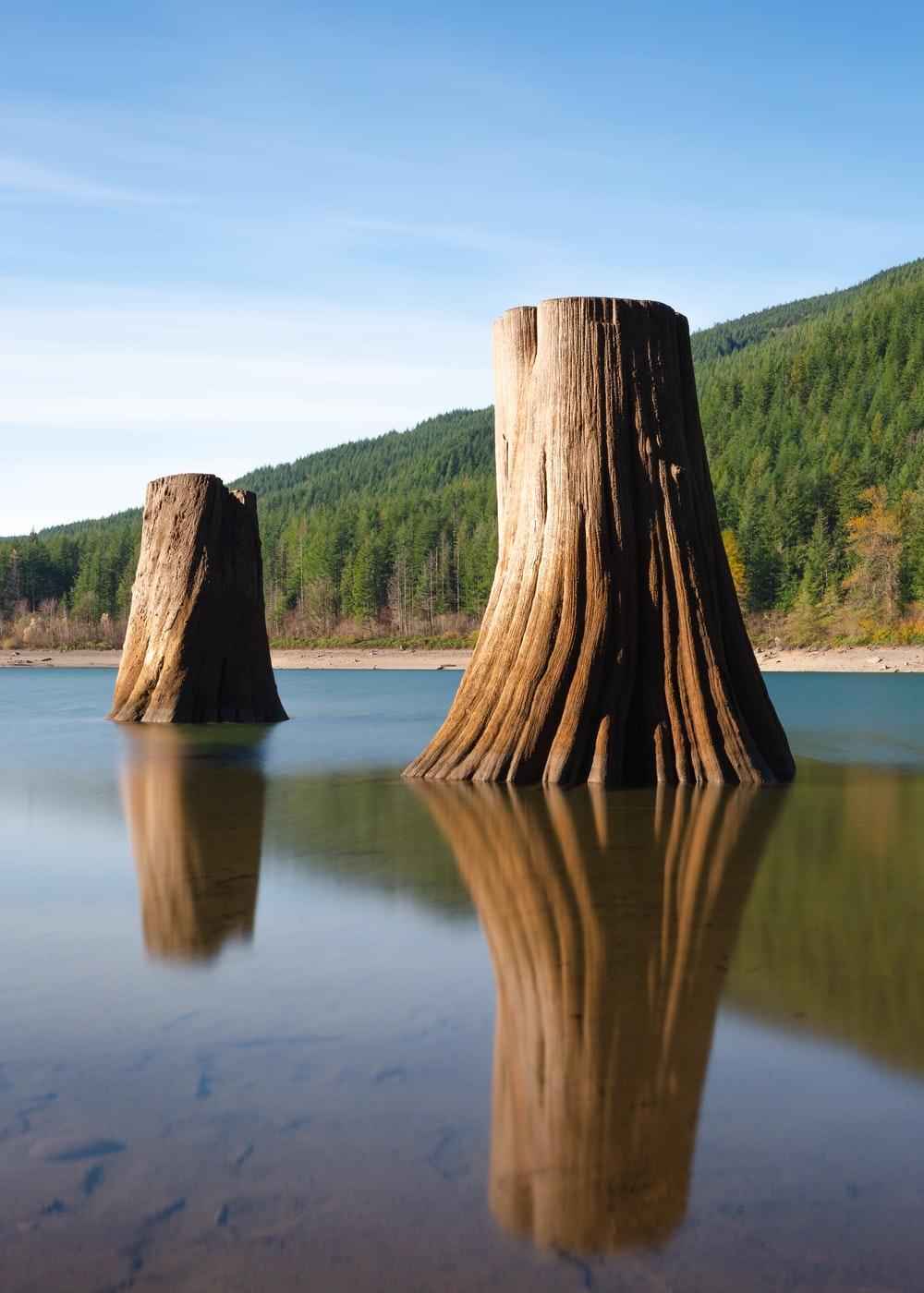 two brown tree in body of water during daytime