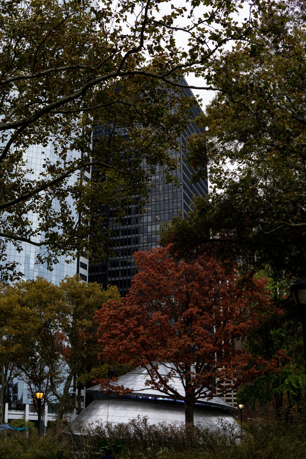 high rise building surrounded by trees