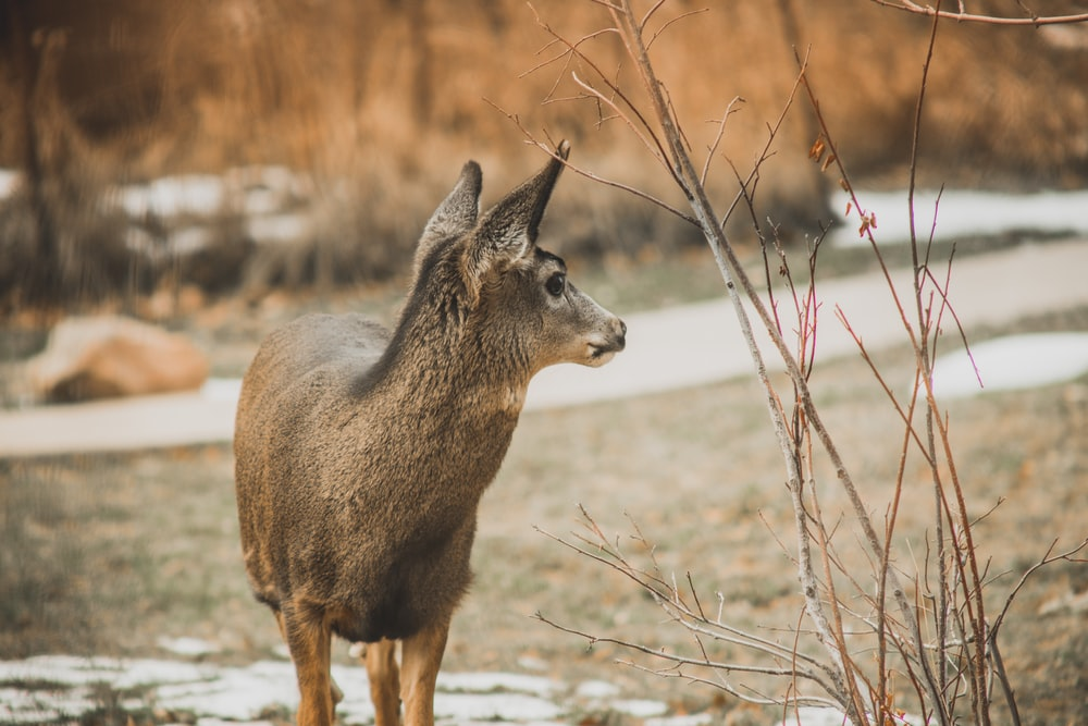 brown animal near road
