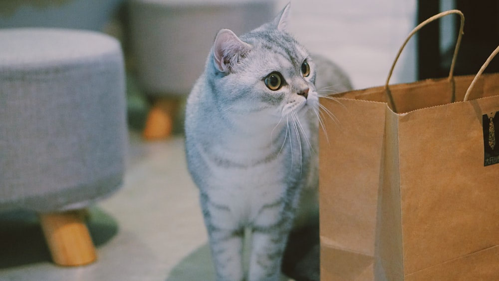 gray Russian blue cat standing beside paper bag
