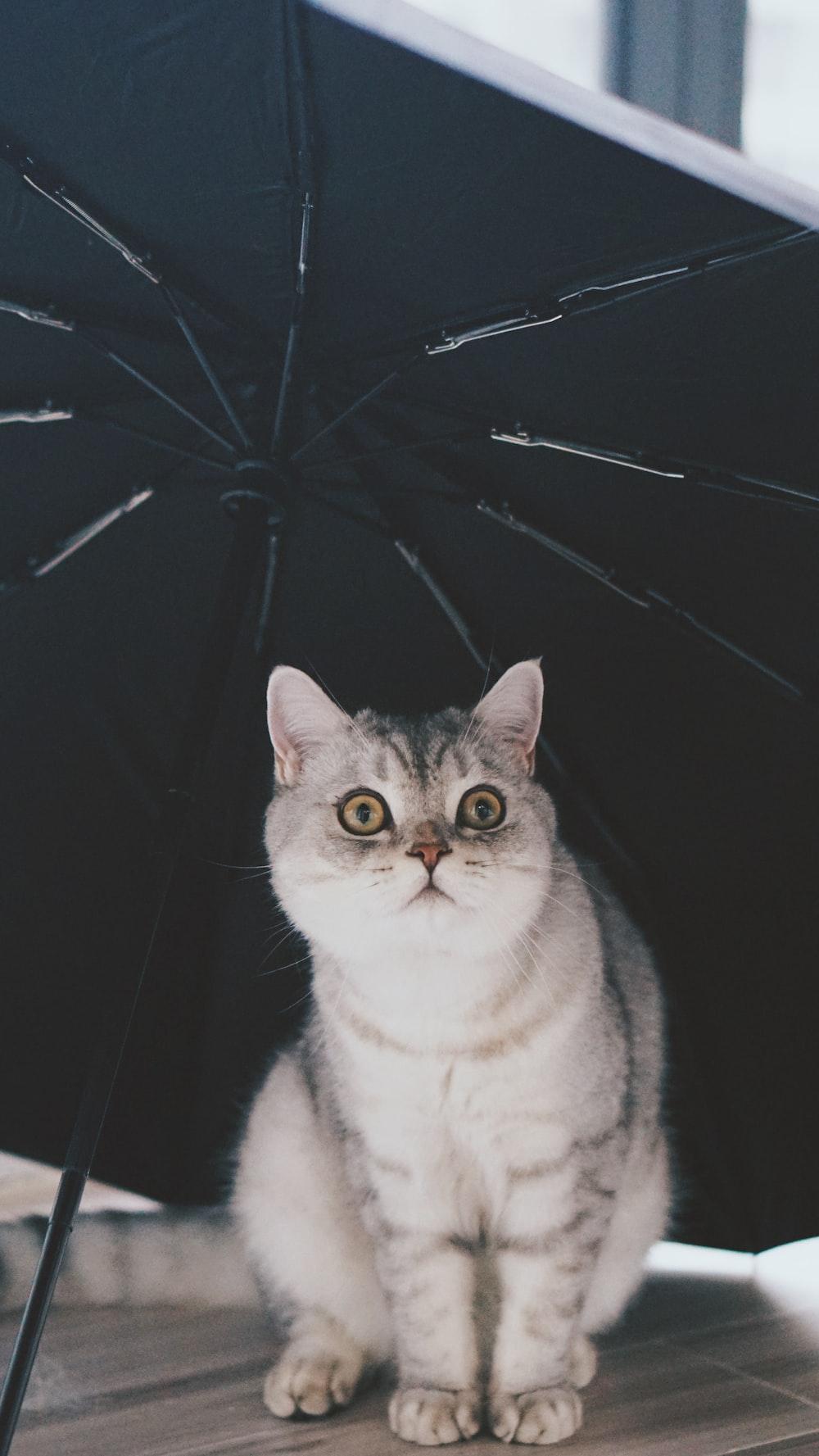 gray and white cat under black umbrella