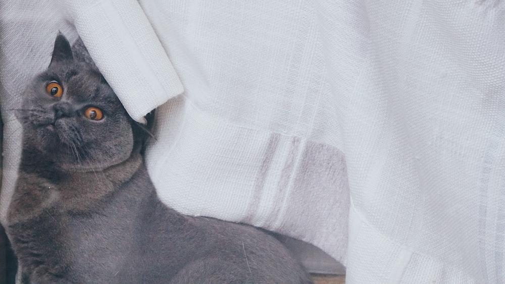 Siamese cat on white textile