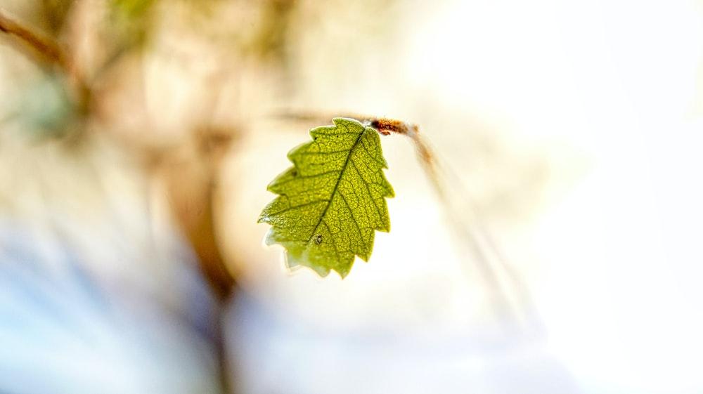 view of ornate leaf