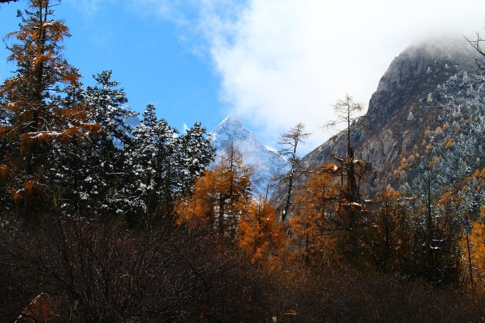 field of trees near mountain